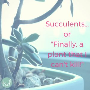 "Succulents...or ""Finally, a plant that I can't kill!"" 